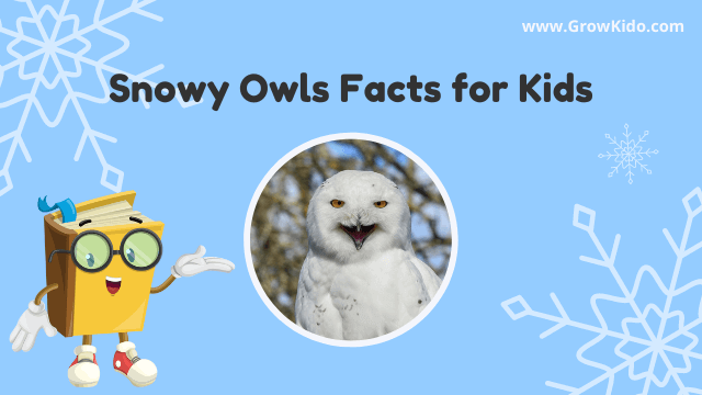 11 Interesting & Fun Snowy Owls Facts for Kids