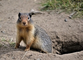 fun facts about groundhogs for kids