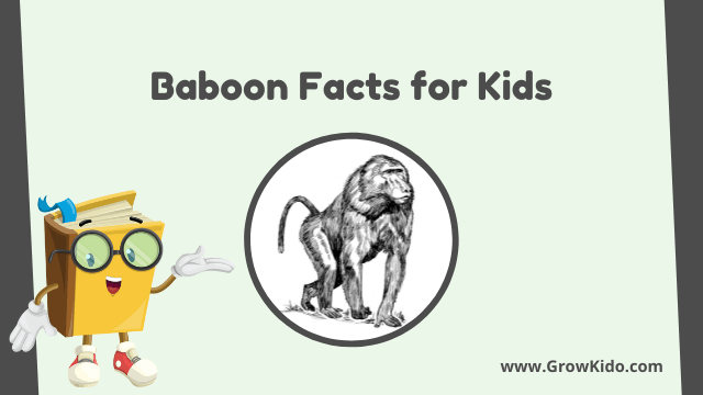 11 Amazing Baboon Facts for Kids [UPDATED Facts]
