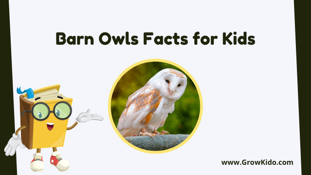 11 Amazing Barn Owls Facts for Kids