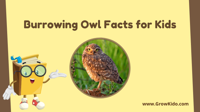 11 Amazing Burrowing Owl Facts for Kids [UPDATED Facts]