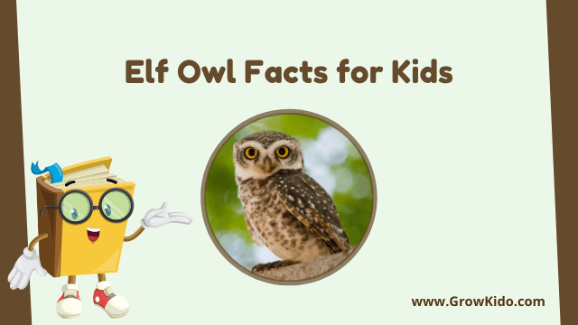 11 Amazing Elf Owl Facts for Kids