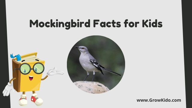 11 Amazing Mockingbird Facts for Kids [UPDATED Facts]