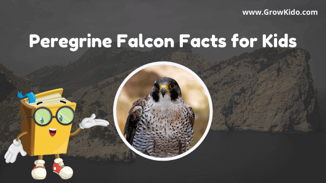 11 Amazing Peregrine Falcon Facts for Kids