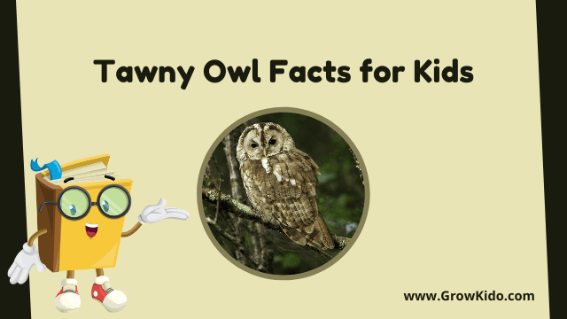 11 Amazing Tawny Owl Facts for Kids [UPDATED Facts]