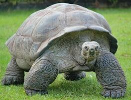 interesting tortoise information for kids