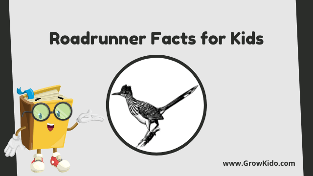 11 Interesting Roadrunner Facts for Kids [UPDATED Facts]