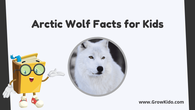 11 Amazing Arctic Wolf Facts for Kids [UPDATED Facts]