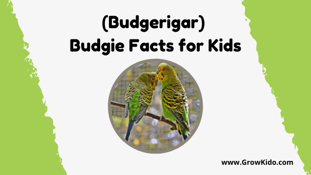 11 Amazing (Budgerigar) Budgie Facts for Kids [UPDATED]