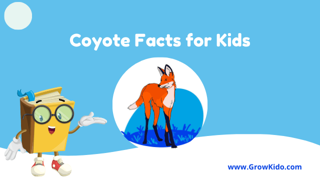13 Amazing Fun Coyote Facts for Kids [UPDATED Facts]