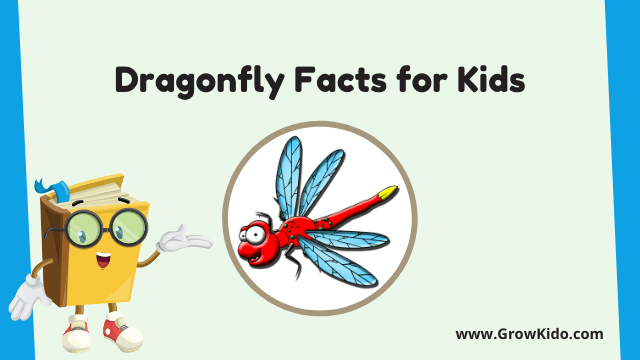 11 Amazing Dragonfly Facts for Kids [UPDATED Facts]