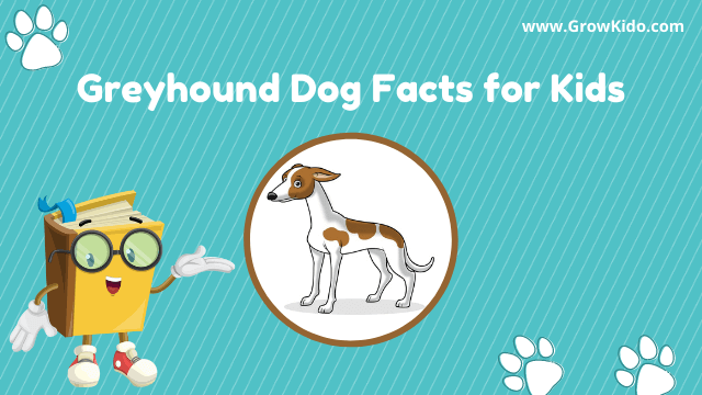 11 Amazing Greyhound Facts for Kids [UPDATED Facts]