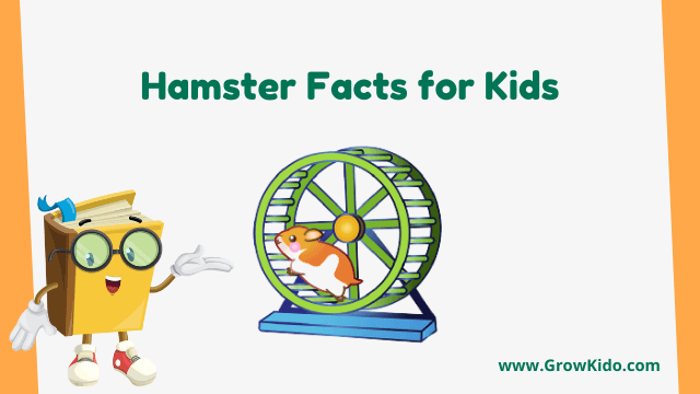 11 Amazing Hamster Facts for Kids [UPDATED Facts]