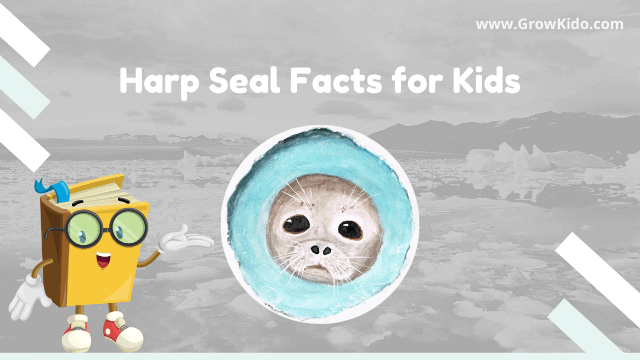 11 Amazing Harp Seal Facts for Kids [UPDATED Facts]