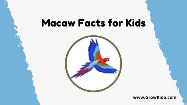 11 Amazing Macaw Facts for Kids [UPDATED Facts]