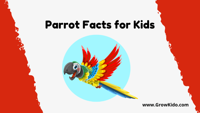 11 Amazing Parrot Facts for Kids [UPDATED Facts]