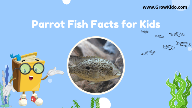 11 Amazing Parrot Fish Facts for Kids [UPDATED Facts]
