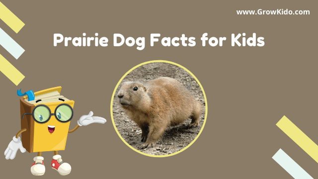 11 Amazing Prairie Dogs Facts for Kids [UPDATED Facts]