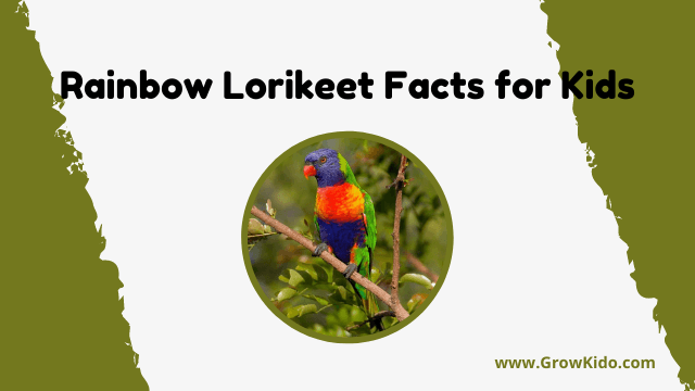 11 Amazing Rainbow Lorikeet Facts for Kids [UPDATED Facts]