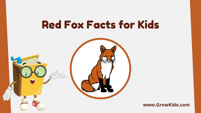 11 Amazing Red Fox Facts for Kids [UPDATED Facts]