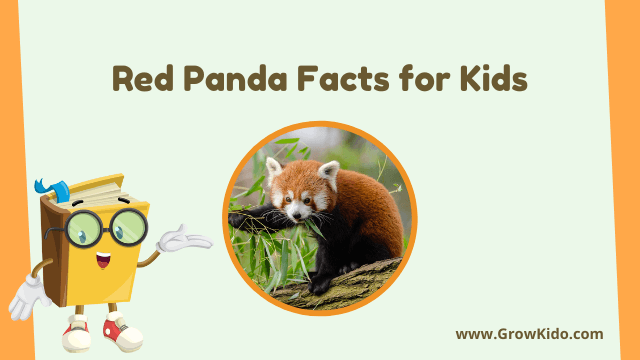 11 Amazing Red Panda Facts for Kids [UPDATED Facts]