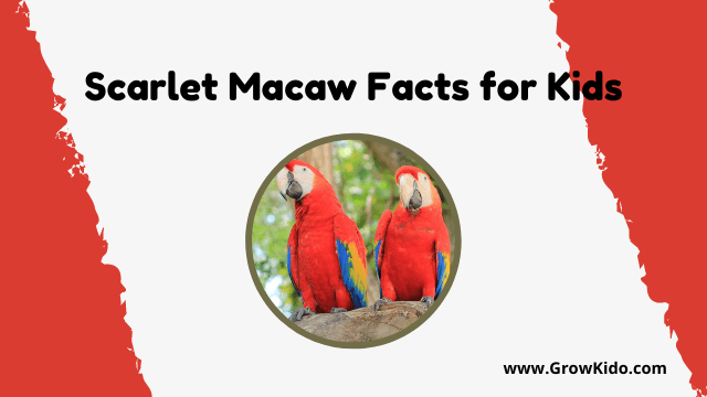 11 Amazing Scarlet Macaw Facts for Kids [UPDATED Facts]