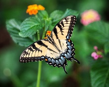 interesting facts about butterflies for kids