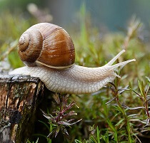 interesting facts about snails for kids