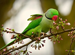 parrot birds information for kids