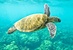 Fun Facts about Green Sea Turtle