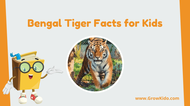 11 Amazing Bengal Tiger Facts for Kids [UPDATED Facts]
