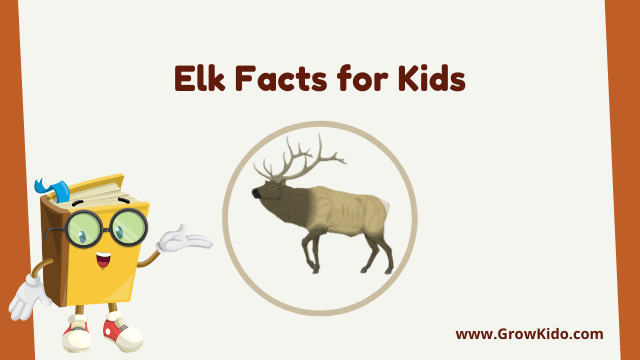 11 Amazing Elk Facts for Kids [UPDATED Facts]
