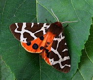 Interesting Facts about Moths for Kids