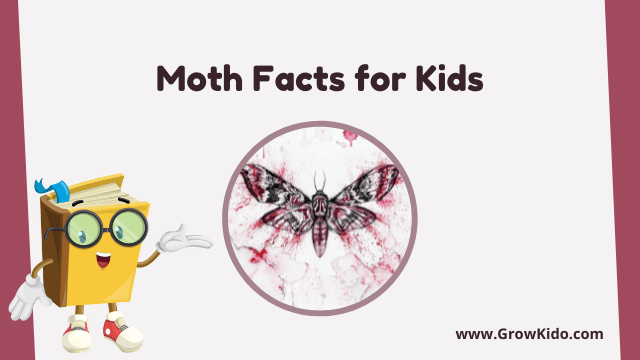 11 Amazing Moth Facts for Kids [UPDATED Facts]