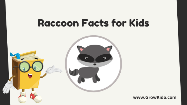 11 Amazing Raccoon Facts for Kids [UPDATED Facts]