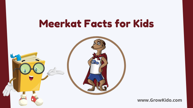 11 Amazing Meerkat Facts for Kids [UPDATED Facts]
