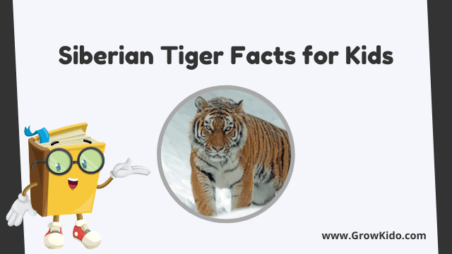 11 Amazing Siberian Tiger Facts for Kids [UPDATED Facts]
