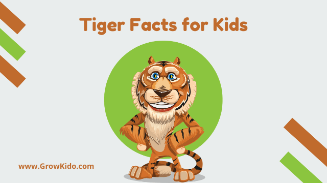 11 Amazing Tiger Facts for Kids [UPDATED Facts]