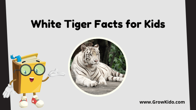11 Amazing White Tiger Facts for Kids [UPDATED Facts]