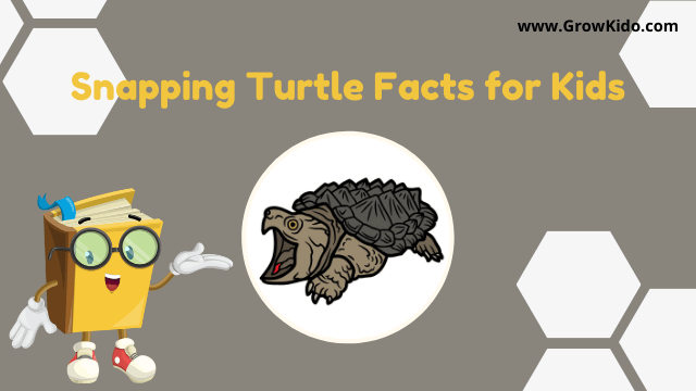 11 Amazing Snapping Turtle Facts for Kids [UPDATED Facts]