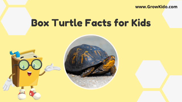 11 Amazing Box Turtle Facts for Kids [UPDATED Facts]