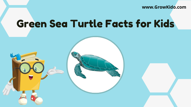 11 Amazing Green Sea Turtle Facts for Kids [UPDATED Facts]