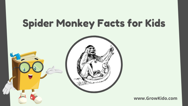 11 Amazing Spider Monkey Facts for Kids [UPDATED Facts]